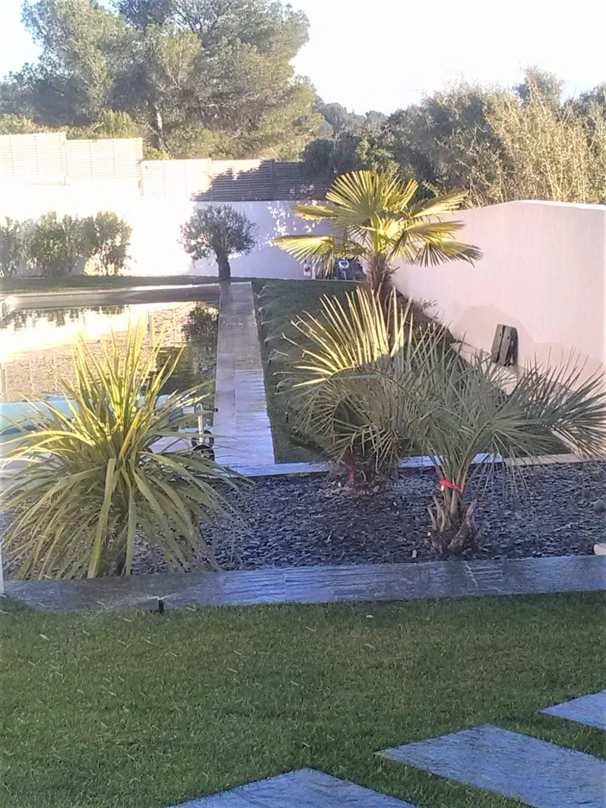 Aménagement d\'un jardin moderne avec des plantes exotiques autour d ...